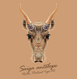 Vector Illustrated Portrait of Saiga antelope. Royalty Free Stock Photos