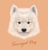 Vector Illustrated Portrait of Samoyed dog. Stock Photos
