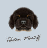 Vector Illustrated Portrait of Tibetan Mastiff puppy. Stock Image