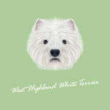 Vector Illustrated Portrait of West Highland White Terrier. Royalty Free Stock Photo