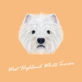 Vector Illustrated Portrait of West Highland White Terrier. Royalty Free Stock Images