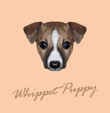 Vector Illustrated Portrait of Whippet puppy. Stock Photography
