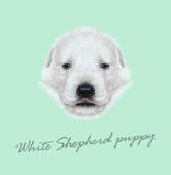 Vector Illustrated Portrait of White Sheperd puppy. Royalty Free Stock Photography