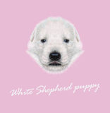Vector Illustrated Portrait of White Sheperd puppy. Stock Image