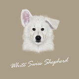Vector Illustrated Portrait of White Swiss Shepherd dog Stock Photo