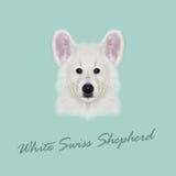 Vector Illustrated Portrait of White Swiss Shepherd dog. Stock Images