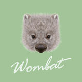 Vector Illustrated portrait of Wombat. Royalty Free Stock Images