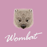 Vector Illustrated portrait of Wombat. Royalty Free Stock Photography