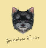Vector Illustrated portrait of Yorkshire Terrier puppy Royalty Free Stock Photo