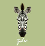 Vector Illustrated Portrait of Zebra. Royalty Free Stock Images