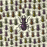 Vector illustrated seamless stag-beetle pattern Stock Photography