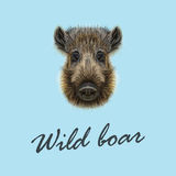 Vector Illustrated of Wild boar. Stock Photo
