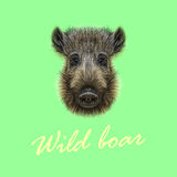 Vector Illustrated of Wild boar. Royalty Free Stock Image