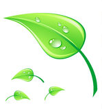 Vector illustratie groen blad Stock Fotografie