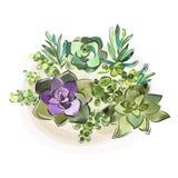 Vector illustratie Hand-drawn waterverfinzameling van succulents voor ontwerp, Stock Afbeelding
