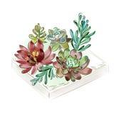 Vector illustratie Hand-drawn waterverfinzameling van succulents voor ontwerp, Stock Foto