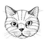 Vector illustratie Het gezicht van de kat, zwart-witte hand-drawn schets stock illustratie