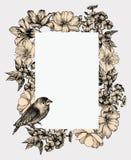 Vector illustratie Uitstekend kader met bloeiende bloemen en bir Stock Foto