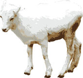 Vector illustratie van babygeit royalty-vrije stock afbeeldingen