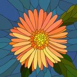 Vector illustratie van bloem oranje aster. Stock Foto