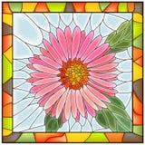 Vector illustratie van bloem roze aster. Royalty-vrije Stock Afbeeldingen