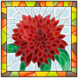 Vector illustratie van bloemchrysant. Stock Foto's