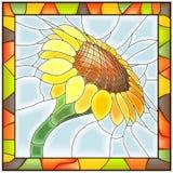 Vector illustratie van bloemzonnebloem. Royalty-vrije Stock Foto