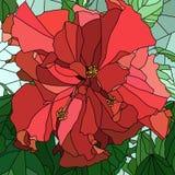 Vector illustratie van Chinese bloemhibiscus (nam toe). Royalty-vrije Stock Fotografie