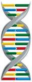 Vector illustratie van deoxyribonucleic zuur. Royalty-vrije Stock Foto