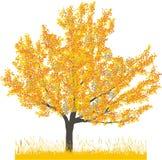Vector illustratie van kersenboom in de herfst Stock Afbeelding