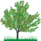Vector illustratie van kersenboom in de zomer Royalty-vrije Stock Afbeeldingen