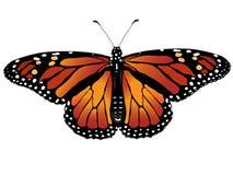 Vector illustratie van vlinder Stock Fotografie
