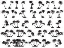 Vector illustratiessilhouet van palmen Royalty-vrije Stock Afbeeldingen