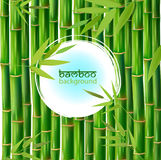Vector Illustration of an Abstract Background with Bamboo Stock Photos