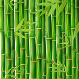 Vector Illustration of an Abstract Background with Bamboo Stock Images