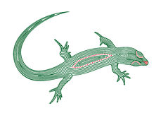 Vector illustration of abstract, stylized lizard in green and red color Stock Image