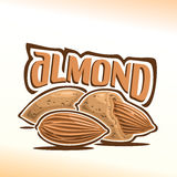 Vector illustration of almond Stock Image