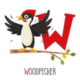 Vector Illustration Of Alphabet Letter W And Woodpecker. Eps 10 stock illustration