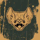 Vector illustration of angry bat Royalty Free Stock Image