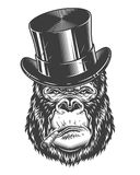 Head of gorilla. Vector illustration, angry gorilla head in the baseball hat on a white background Stock Images
