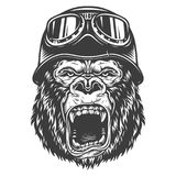 Head of gorilla. Vector illustration, angry gorilla head in the vintage motorcycle helmet on a white background Stock Photos