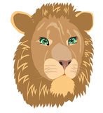 Vector illustration animal lion Royalty Free Stock Photography