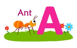 Animal alphabet A.A for ant. Vector illustration of ant with letter a isolated on white background.B for bee Stock Images