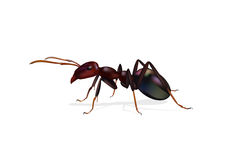 Ant Stock Images