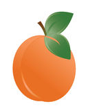 Vector illustration of the apricot Stock Images