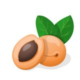 Vector illustration. Apricots with leaves. Royalty Free Stock Images