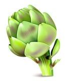 Vector illustration of artichoke. Stock Photography
