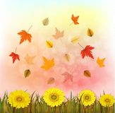 Vector illustration of an yellow sunflower with fall leaves on an autumn bokeh background. Ready elements with background Royalty Free Stock Image