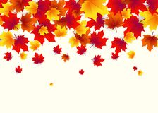Vector illustration of autumn border background with falling maple leaves Royalty Free Stock Photography