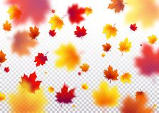Vector illustration autumn flying red, orange, brown, yellow maple leaves Royalty Free Stock Photos
